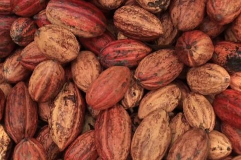 Haoma | Chocolate de Origem